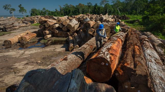 OSINFOR estimará anualmente el índice de tala y comercio ilegal de madera en el Perú