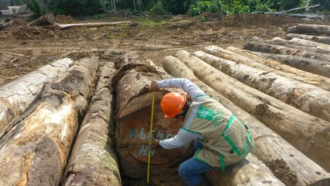 OSINFOR presenta publicación sobre fiscalización en materia forestal y de fauna silvestre en el país