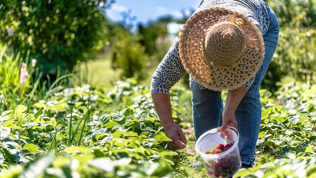 El MTPE publica Reglamento de negociación colectiva y condiciones de trabajo de la Ley N° 31110, del Régimen Laboral Agrario