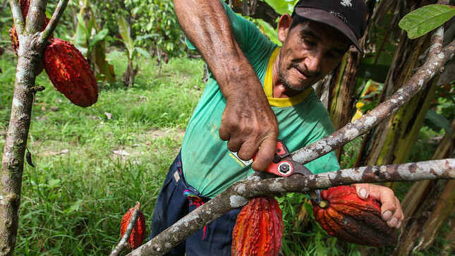 Reglamento de la Ley N° 31110 garantiza derechos laborales de trabajadores agrarios