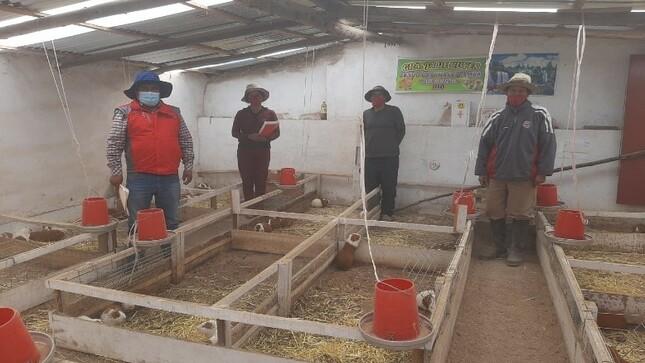 Huancayo: emprendedores de Haku Wiñay buscan superar la pobreza con crianza de cuyes