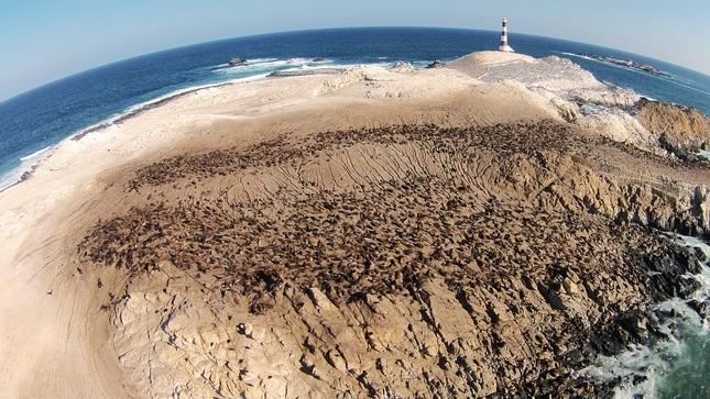 Punta Coles regresa: Desde hoy se reinician actividades turísticas en el principal destino de biodiversidad marina de Moquegua