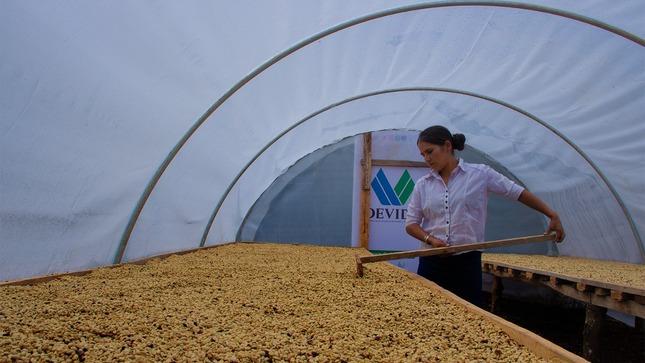 Vraem: Devida y Municipalidad Distrital de Anchihuay entregan 250 secadores solares para café