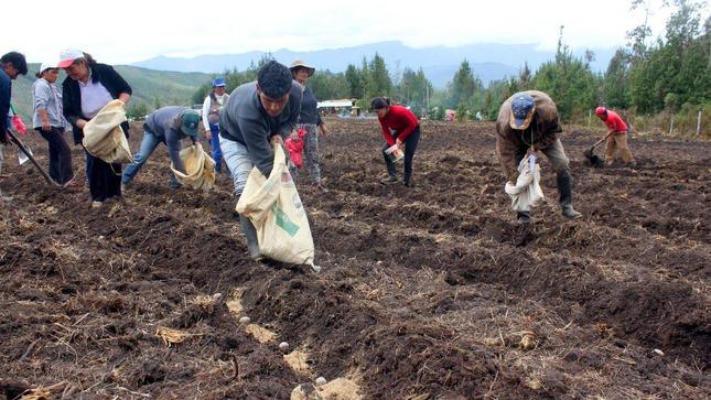 Agro Rural abastecerá con 300 toneladas adicionales de guano de las islas e iniciará plan de fortalecimiento de agricultura orgánica