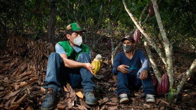 Vraem: Devida transfiere más de dos millones de soles para fortalecer cadena productiva de cacao en Samugari y Ayna