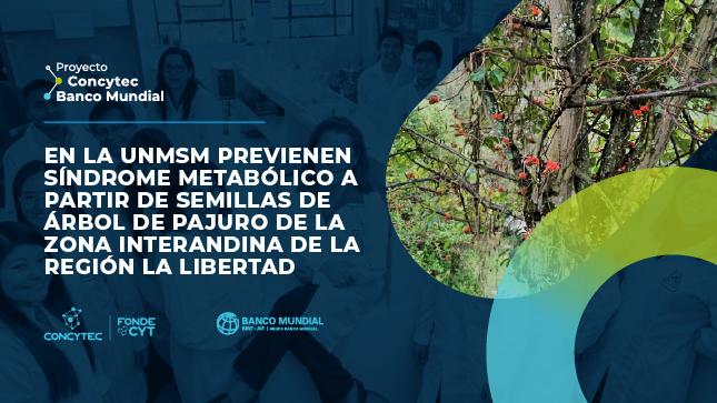 En la UNMSM previenen síndrome metabólico a partir de semillas de árbol de pajuro de la zona interandina de la región La Libertad