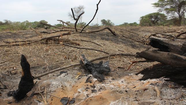 SERFOR capacita a funcionarios para el combate de delitos contra la vida silvestre y bosques