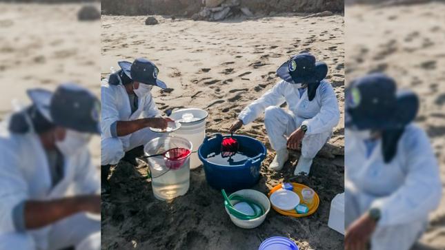Tumbes: Imarpe realiza estimación del impacto de la extracción de postlarvas de langostinos sobre la biota marina