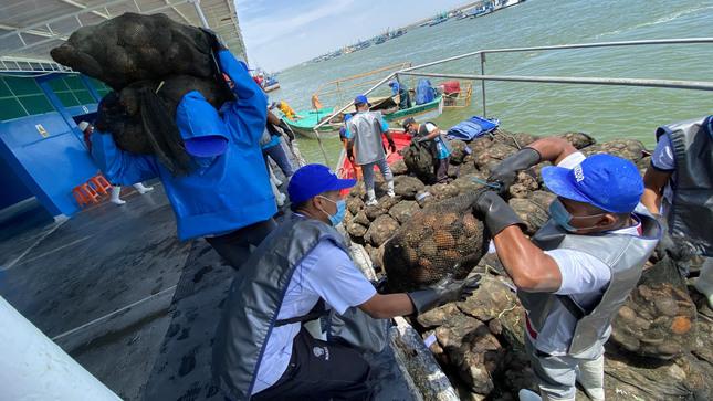 Sanipes revaluará la bahía de Sechura donde se produce el 80% de conchas de abanico para exportación