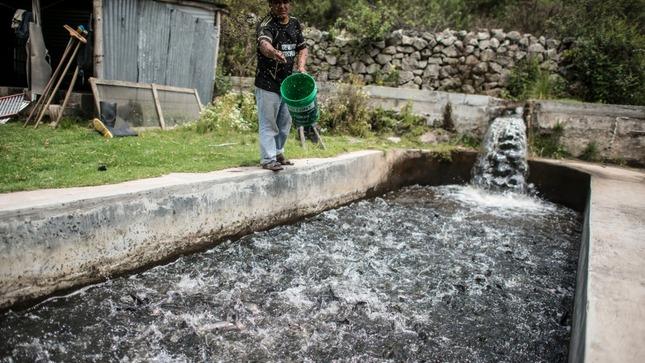 Programa de Créditos Supervisados en Fondepes adjudicara S/ 9 MILLONES Pesca Artesanal y Acuicultura