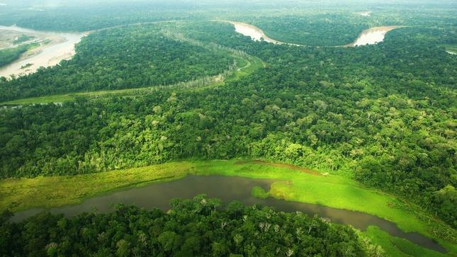 MIDAGRI implementará Programa de Gestión Sostenible de Producción Forestal de casi S/ 513 millones en nueve regiones del país