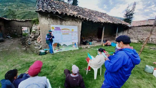 Apurímac: Productores de papa fortalecen capacidades en Escuelas de Campo