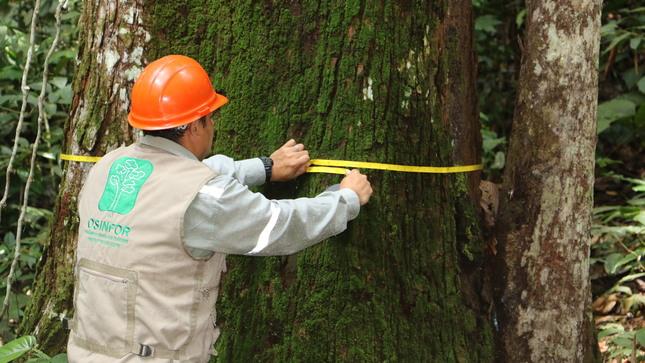 OSINFOR articula con autoridades forestales la medición del índice de tala y comercio ilegal de la madera en Perú