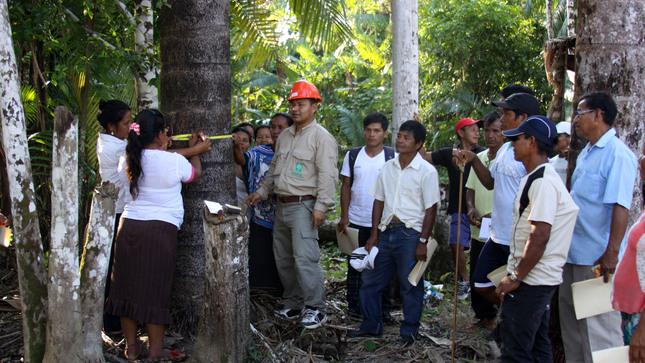 OSINFOR: fortalece capacidades de titulares de concesiones forestales maderables