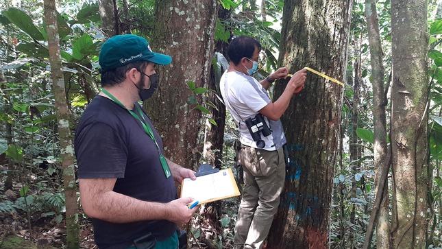 Cajamarca: SERFOR inspecciona plan de manejo forestal y capacita a comunidades nativas de Naranjos y Supayaku