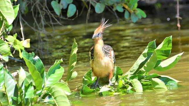 Global Big Day 2021: Perú se corona campeón mundial en observación de aves