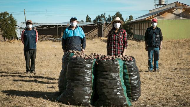 Ayacucho: agricultores de papa aumentaron su producción en 20% con uso de semillas certificadas