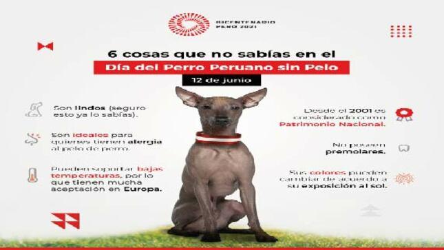 El dia del Perro Peruano - Nombrado Patrimonio Cultural del Peru