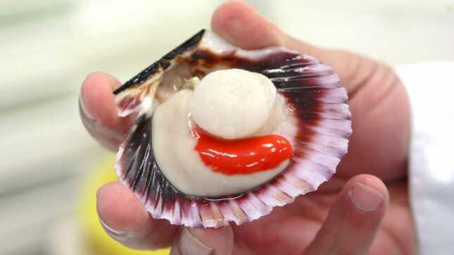 Produce publicó el proyecto de Reglamento de Ordenamiento Pesquero de recursos bentónicos