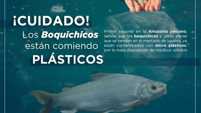 Científicos del IIAP demuestran que peces de consumo humano de la Amazonía ingieren plástico