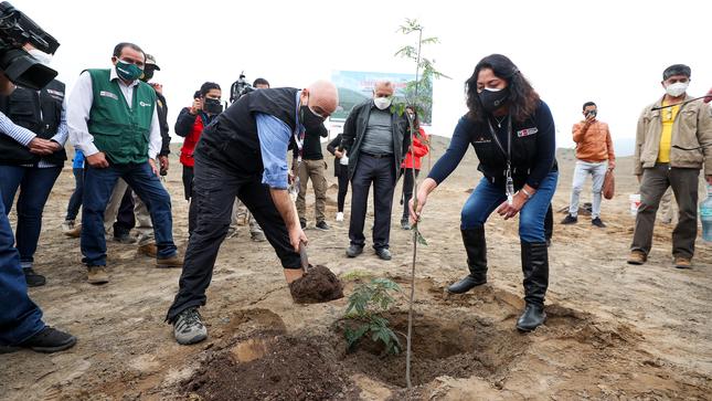 Gobierno inició el proceso de forestación de 2,000 hectáreas de Franja Verde de la futura Ciudad Bicentenario en Ancón