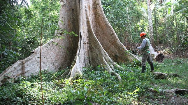 OSINFOR fortalece capacidades sobre trazabilidad de la madera para garantizar buen manejo de los recursos forestales