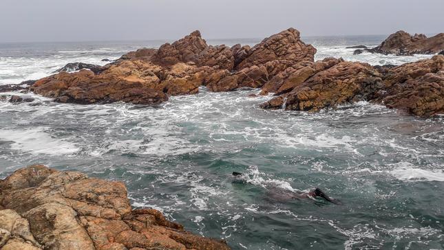 Imarpe realiza evaluación biológica poblacional del recurso erizo en el litoral de Ilo