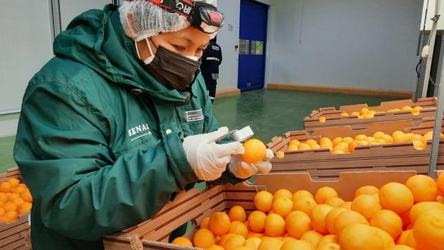 SENASA: Perú se alista para exportar cítricos y arándanos a la India