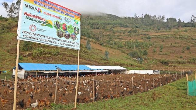 Amazonas: Haku Wiñay proveerá más de 8 mil gallinas mejoradas a familias de Colcamar y La Jalca