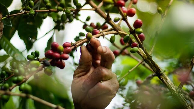 OSINFOR reafirma su compromiso para impulsar las CUSAF en la Amazonía peruana