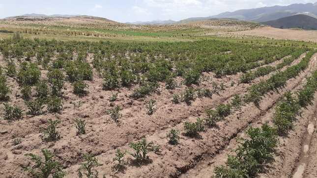 Puno: autoridades locales avanzan en el diseño de sus planes de prevención y reducción del riesgo de sequía para la agricultura
