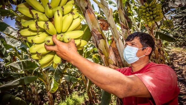 MIDAGRI lanza padrón para dar identidad digital a más de 2 millones de Productores Agrarios
