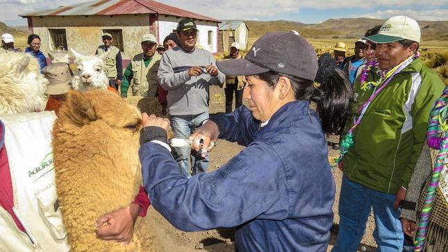 Agro Rural: Más de 300 mil productores de la agricultura familiar se benefician con actividades y proyectos ejecutados en zonas rurales