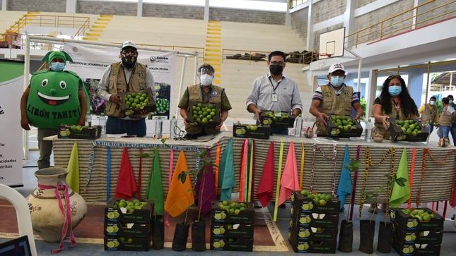 Goresam asistirá técnicamente a agricultores de Lamas para producir limón Tahití
