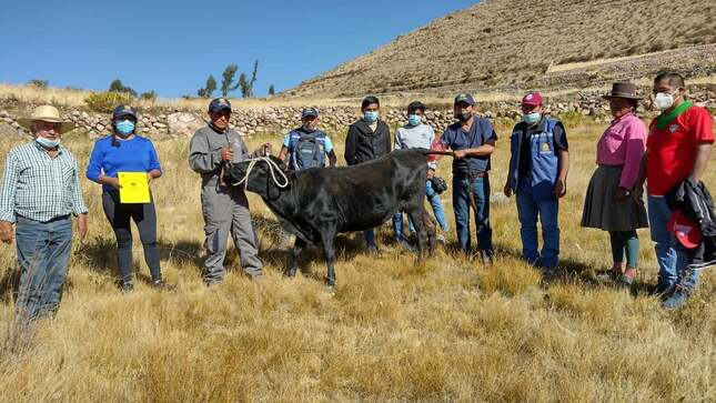 Monitoreo y supervisión de la ejecución del proyecto bovino en diversos distritos