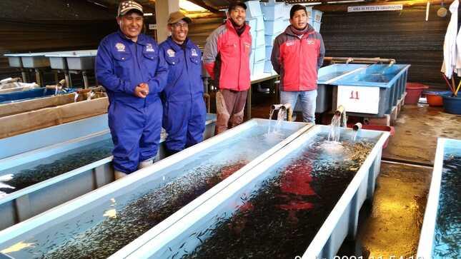 Cusco: 17 mil 849 familias desarrollan proyectos productivos de Haku Wiñay vía núcleos ejecutores