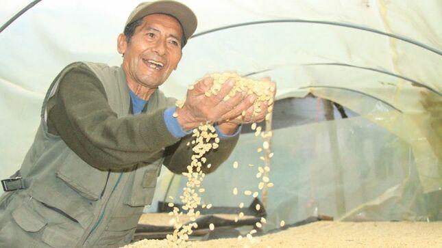 Puno: 300 cafetaleros de Alto Inambari mejorarán 250 hectáreas de cafés especiales