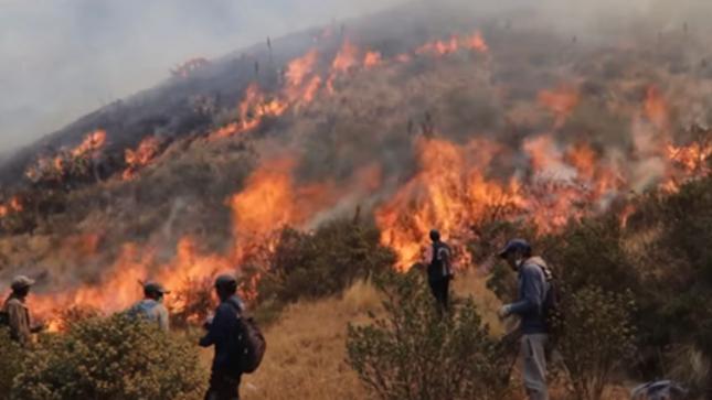 Prevenir incendios forestales ayudan a preservar la capa de ozono
