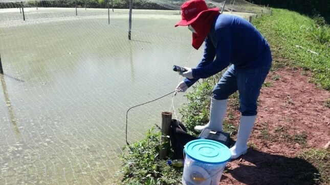 Incrementa supervivencia de alevines de tilapia mediante  cultivo de microalgas en estanques de pre-cría