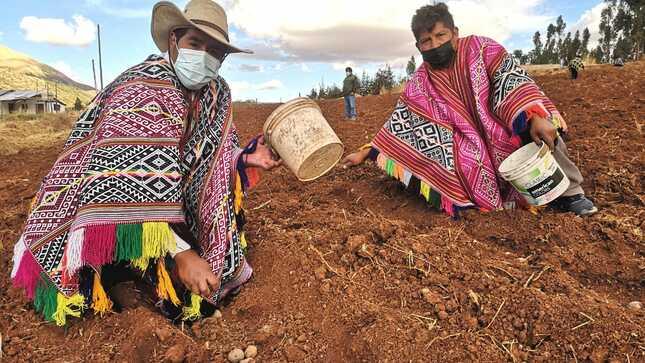 Cusco: 3025 familias rurales mejorarán producción agrícola con uso del guano de las islas y fertilizantes alternativos