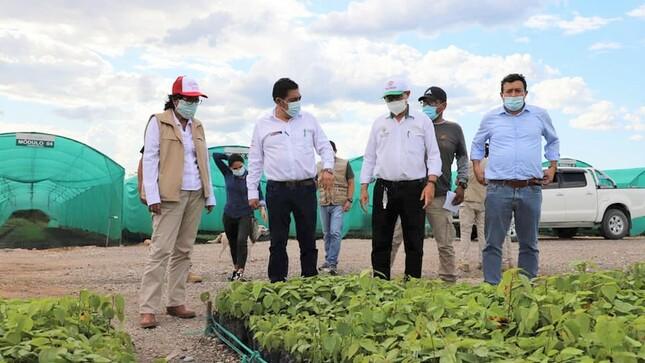Moyobamba: recuperan áreas degradadas gracias al vivero agroforestal de Calzada