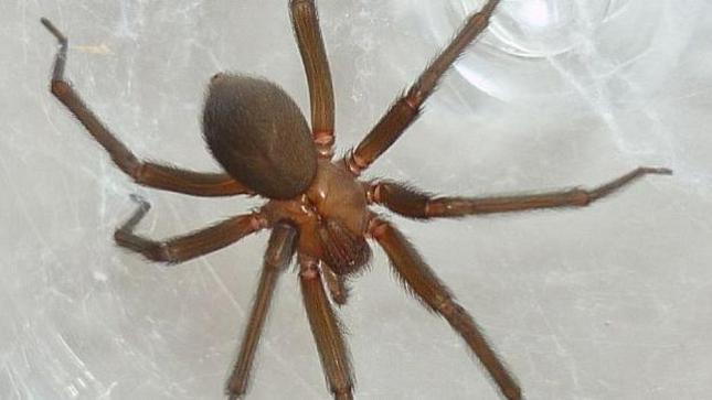 Aumenta proliferación de zancudos y arañas por Incremento de calor