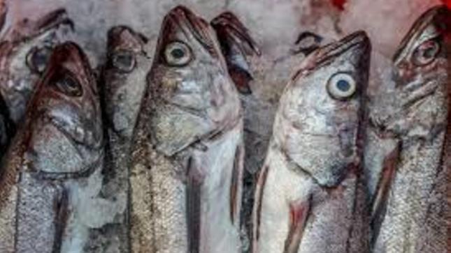 PRODUCE suspende actividades extractivas de la merluza en el norte del país por 42 días