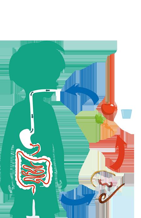 parasitosis en niños pdf