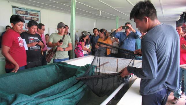 Emprendedores acuícolas de Ucayali, San Martín, Huánuco y Pasco fortalecieron sus técnicas en el proceso reproductivo de peces amazónicos