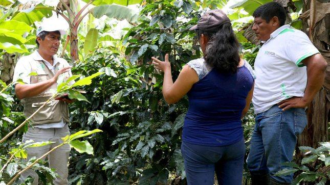 Vraem: 120 familias del distrito de Río Tambo mejoran producción de cafés especiales de altura con actividad financiada por Devida