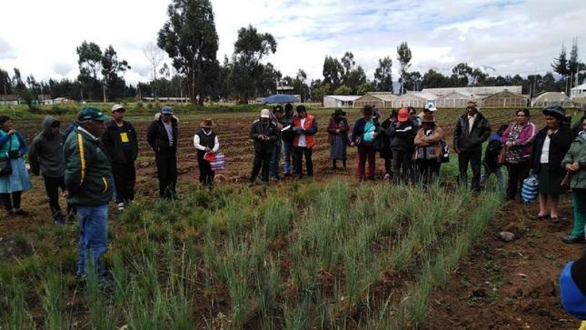 INIA promueve nuevas técnicas para cuidar calidad de suelos de cultivos de maca en Junín
