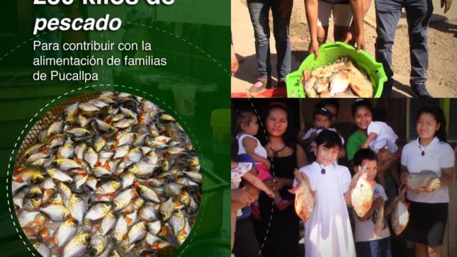 IIAP Y PRODUCE DONARON 230 KILOS DE PESCADO EN PUCALLPA