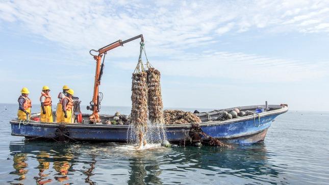 Produce inició la tercera etapa de entrega de créditos a la pesca ...
