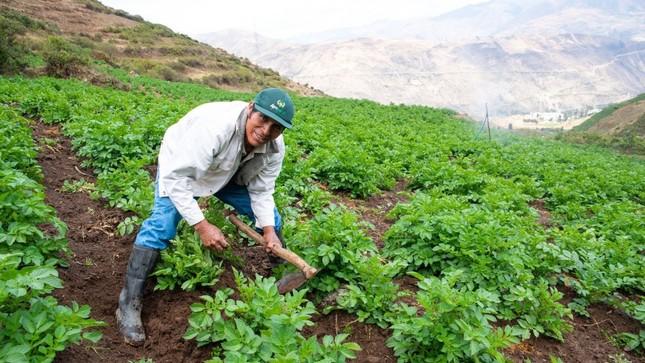 Agricultores serán premiados por el día del campesino